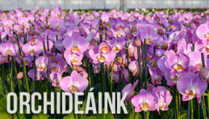 orchideaink